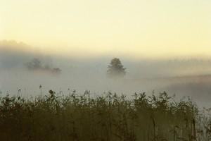 054 Jezioro dziewiszewskie swit