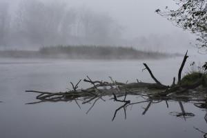 132 Jezioro Dziewiszewskie mgla